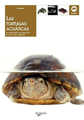 Las tortugas acuáticas