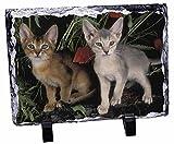 Abessinier-Katze mit Mohnblumen-Rock-Foto auf Schieferplatte