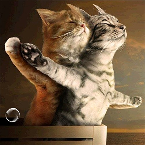 sunnymi 5D Diamant Malerei Liegende Katze Mode Non-Full DIY Stickerei Painting Kreuzstich Diamond...