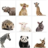 The Stupell Home Décor Collection Baby Animal Studio Portraits 9 Pc Wall Art Set, 9 Piece