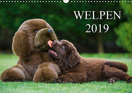 Welpen 2019 (Wandkalender 2019 DIN A3 quer)