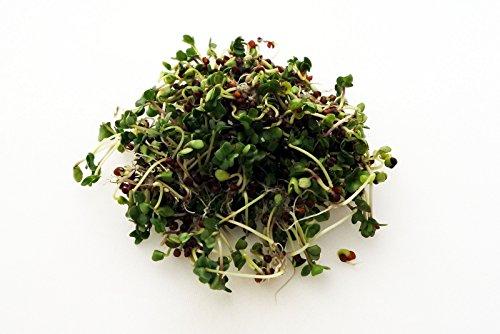 BIO Keimsprossen Grünkohl 100 g Samen für die Sprossenanzucht Sprossen Microgreen Mikrogrün