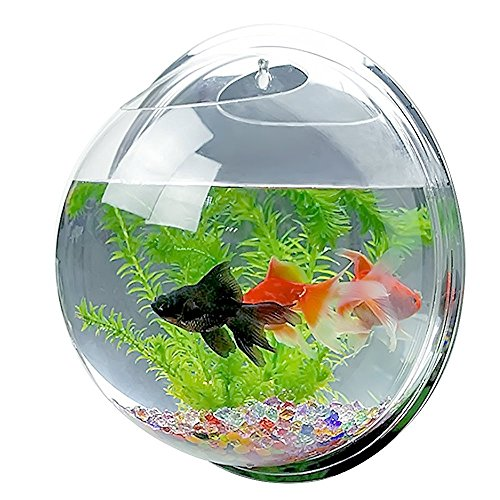 candora TM Creative Acryl zum Aufhängen Wandhalterung Fisch Tank Schale Vase Aquarium, Pot Schale Bubble Aquarium Decor (Schalen Aquarium Fisch)