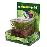 Sumpfpflanzen - Terrarium, Papageien-Schlauchpflanze schmalblättrig - Sarracenia psittacina