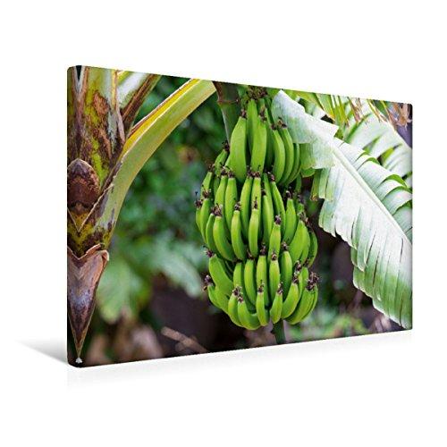 Premium Textil-Leinwand 45 x 30 cm Quer-Format Bananenpflanze, El Guro, Valle Gran Rey | Wandbild, HD-Bild auf Keilrahmen, Fertigbild auf hochwertigem Vlies, Leinwanddruck von Stephan Knödler