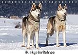 Huskys im Schnee (Tischkalender 2019 DIN A5 quer): Portraits von Sibirischen Huskys im Winter (Monatskalender, 14 Seiten ) (CALVENDO Tiere)