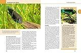 Aquarium, Das große GU Praxishandbuch - 4