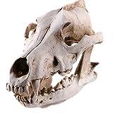 Wolf Katze Menschen Dinosaurier Gorilla Skull Modell Resin Skull Modell QualitäT Und QualitäT Inspiration FüR Schreiben Und Zeichnung Inspirieren Streich Requisiten Movie Requisiten (Wolf)
