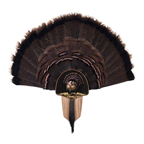 Walnuss Hohl Country Türkei Fan Mount & Display Kit Kompletter Ventilator aus Eiche -