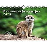 Erdmännchenzauber DIN A4 Kalender 2020 Erdmännchen Geschenk-Set: Zusätzlich 1 Gruß- und 1 Weihnachtskarte - Seelenzauber