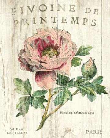 Pivoine de Printemps par Schlabach, Sue–Fine Art Print Disponible sur papier et toile, Toile, LARGE (32 x 40 Inches )