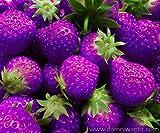 Keland Garten - 100 Großfrüchtige zuckersüssErdbeere Samen Mischung 6 Sorten für Garten und Balkon (Violett)