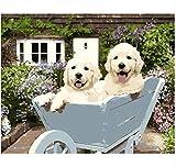 Yqgdss Puppies On The Pushcart Pittura Fai da Te con I Numeri Pittura Ad Olio Immagini di Arte della Parete per La Decorazione Domestica 40x50cm