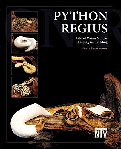 python-regius-atlas-of-colour-morphs-keeping-and-breeding