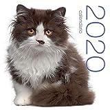 Gatti. Calendario 2020 da muro