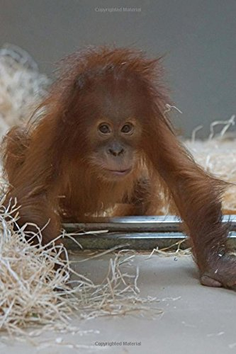 Baby Orangutan Animal Journal: 150 Page Lined Notebook/Diary