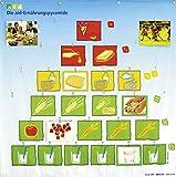 Die aid-Ernährungspyramide - Wandsystem mit Fotokarten