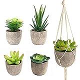 FEPITO 5Pcs Künstlichen Sukkulenten mit 2Pcs Pflanze Kleiderbügel Faux Succulents groß Kaktus Aloe echeverien mit Grau Töpfe Zum Aufhängen Stiele Bulk für Home Dekoration im Innenbereich