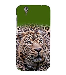 A2ZXSERIES Nature Animal Leopard Back Case Cover for Acer Liquid Z630