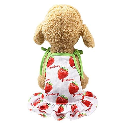 nd Prinzessin Kleid ❤️Hund Dot Rock Haustier Hund Kleid, Haustier Kleidung Hund Dot Rock Welpen Prinzessin Kleid Schön Erdbeere/Ananas XS/S/M/L/XL (Rot, L) (Totoro Kostüm Baby)
