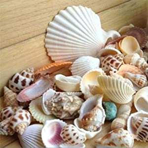 Bodhi2000 100g Mixed Sea Beach Shells Crafts Seashells Garden Aquarium Decor Photo Props