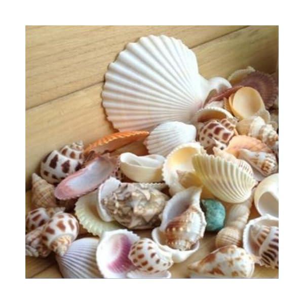 Bodhi2000 100g Mixed Sea Beach Shells Crafts Seashells Garden Aquarium Decor Photo Props