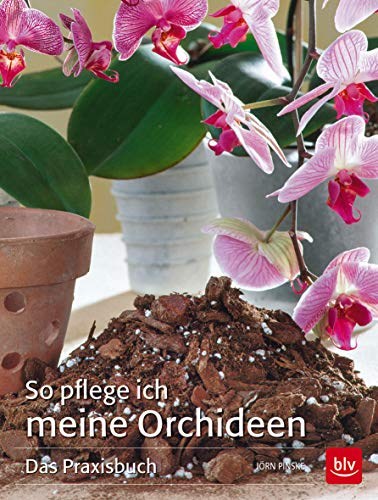 Orchideen Farbe