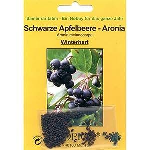 Bonsai - 50 Samen von Aronia melanocarpa, Schwarze Apfelbeere, 90079