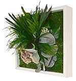 FLOWERBOX Décoration Murale Végétal Gamme Nature Stab Mono