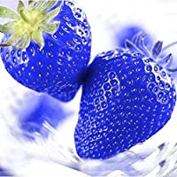 FastDirect Semillas de Fresas Azules Gigantes Frutales Ecologicas 50 PCS Semillas de Frutas para Huerto, Jardin, Balcon Interior