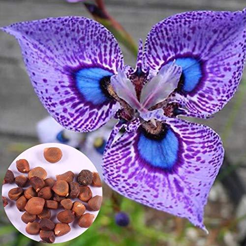 Ncient 50Pcs Semillas Orquídea mariposa Flore Semillas Aromaticas Raras Plantas Bonsai para Maceta Jardín Balcon Interior y Exteriores