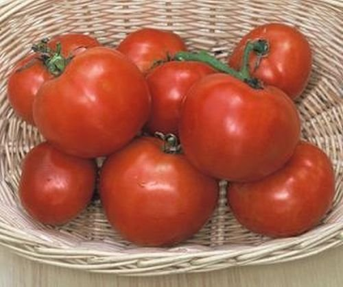20 graines du Manitoba Heirloom Jardins de tomates Simplement Grown Magnifiquement