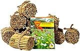 Bienenhotel kaufen