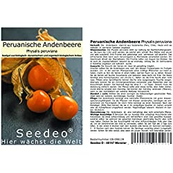 Seedeo Peruanische Andenbeere (Physalis peruviana) 50 Samen BIO