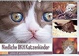 Niedliche BKH Katzenkinder (Wandkalender 2018 DIN A3 quer): Dieser Kalender ist ein Muß für jeden Katzenfreund. (Monatskalender, 14 Seiten ) (CALVENDO Tiere) [Kalender] [Apr 11, 2017] Bürger, Janina