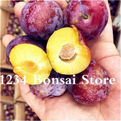 Bloom Green Co. Haute qualité 20 pcs Rare Noir Brin prune Bonsai fruit délicieux douce bio arbre & quot; krim noir & quot; Légumes et fruits Plante en pot: 2