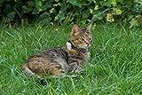 Girafus® Pro-Track-tor Haustier Hund Katze Kleintier Finder Sucher Ortung + Ladegerät - 7