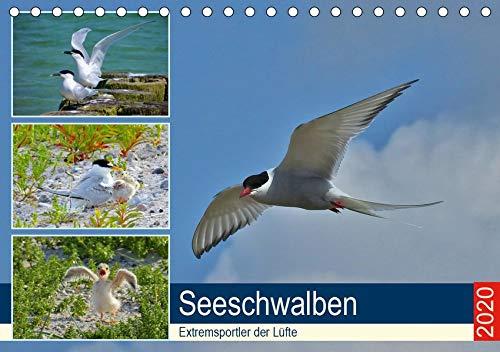 Seeschwalben - Extremsportler der Lüfte (Tischkalender 2020 DIN A5 quer): Einzigartiges über Seeschwalben. (Monatskalender, 14 Seiten ) (CALVENDO Tiere)