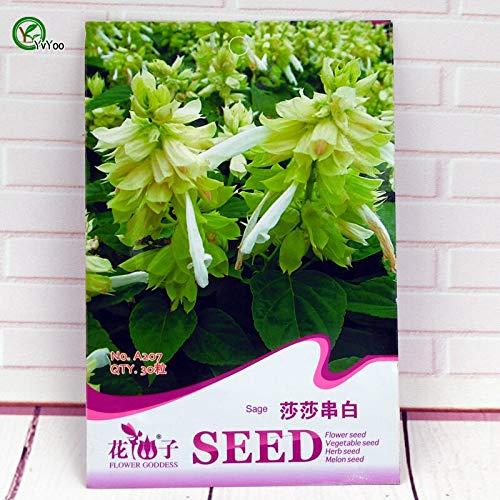 Hermosas semillas de salvia semillas de flores perennes para jardín de bonsai...