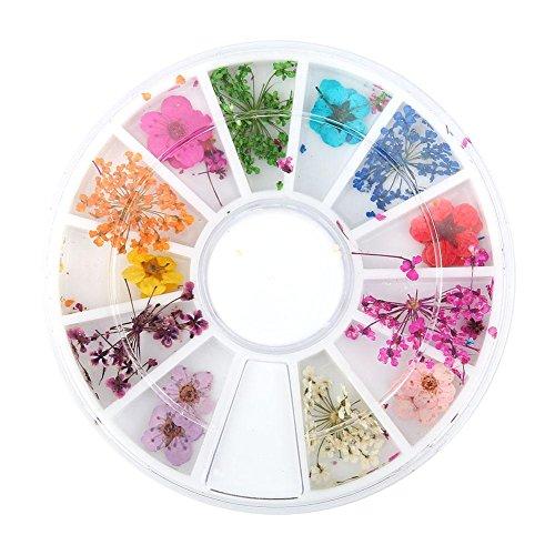 2pcs 12 tipi di fiori secchi naturali colorati set real dry flowers nail decoration manicure arts