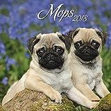 Mops 2018: Broschürenkalender mit Ferienterminen. Hunde-Kalender. 30 x 30 cm