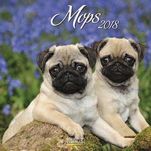 Mops 2018: Broschürenkalender mit Ferienterminen. Hunde-Kalender. 30 x 30 - Mops-fotos