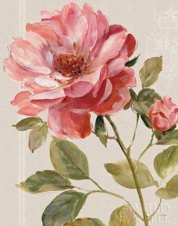 Armonico Rose Lino by audit, Lisa-stampa fine art disponibile su tela e carta, Tela, SMALL (22 x 28 Inches