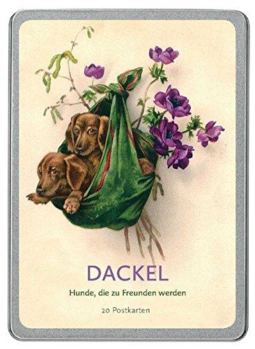 Dackel: Hunde, die zu Freunden werden -