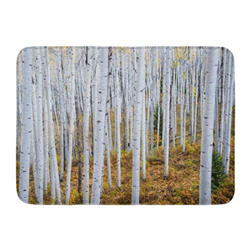 ghkfgkfgk Doormats Bath Rugs Outdoor/Indoor Door Mat Colorful Autumn Grove of Aspen Trees in The Rocky Mountains Colorado Green Vail Bathroom Decor Rug 23.6 x 15.7 Inch -