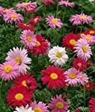 #10: Floral Treasure Mixed Daisy Flower Seeds for Home, Kitchen & Balcony Garden