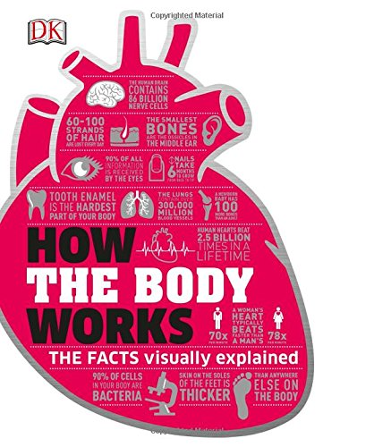 How the Body Works: Big Stuff Simply Explained (Dk Knowledge)