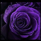 Rosepoem 50 piezas semillas de rosas púrpuras semillas de flores de color sólido para la decoración del jardín