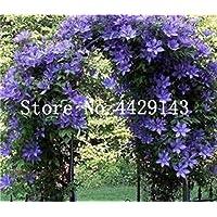 Kalash nuova 100 pezzi di arrampicata semi del gelsomino di fiori per giardinaggioAzzurro