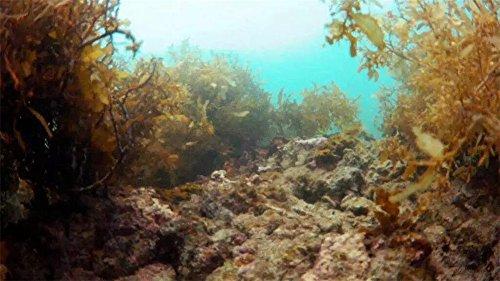 Zoom IMG-3 4k telecamera subacquea rov thorrobotics